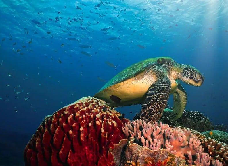 Diving di Pulau Siaba Labuan Bajo, Makin Seru Bareng si Penyu