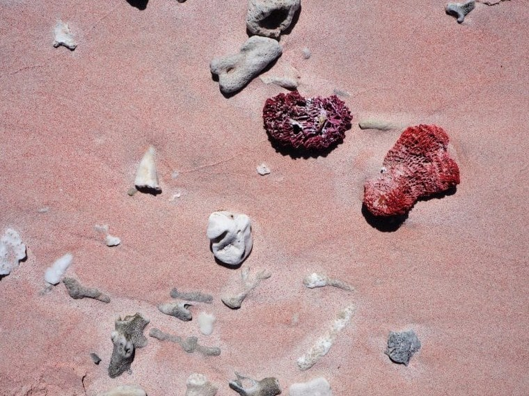 Coral Merah dan Pasir Pink Pantai Pink Labuan Bajo