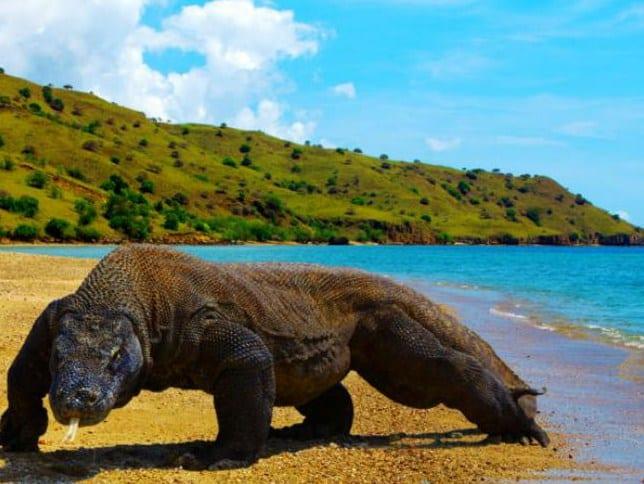 Eksotika Pulau Rinca Labuan Bajo, Gaya Epic buat Jiwa Adventuric