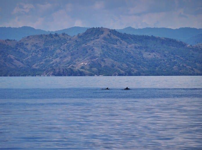 Lumba-Lumba di Pulau Sabolo Labuan Bajo