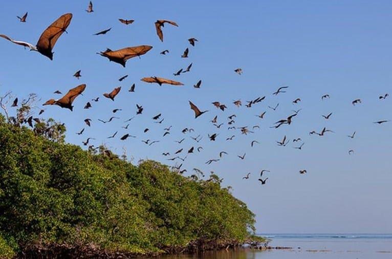 Pulau Kelelawar Labuan Bajo