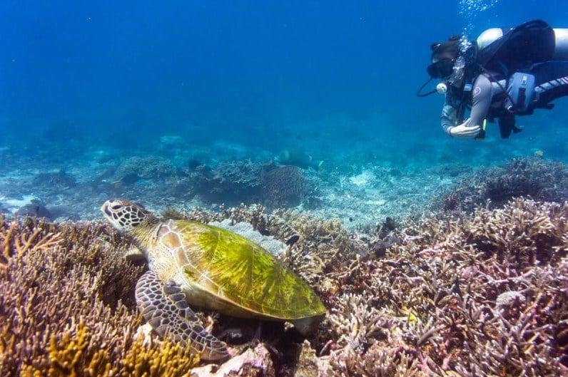 Siaba Labuan Bajo, Diving Site di Utara Pulau Komodo